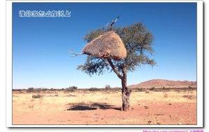 【纳米比亚图片】纳米比亚-2.鸟巢艺术