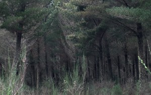 【汤加图片】远方十篇(5)童话森林