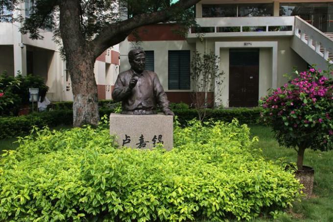 安波千年古银杏树
