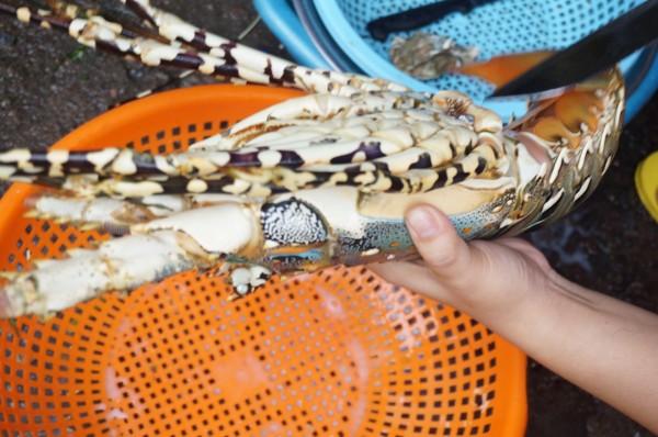 女人瘦小柔软但收拾起大龙虾来就 皮皮虾的肉不丰满,但很鲜.   两图片