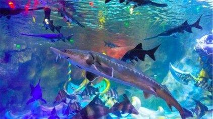 幻太奇海洋馆位于重庆市主城区小时代购物中心,是一家集海洋生物展示