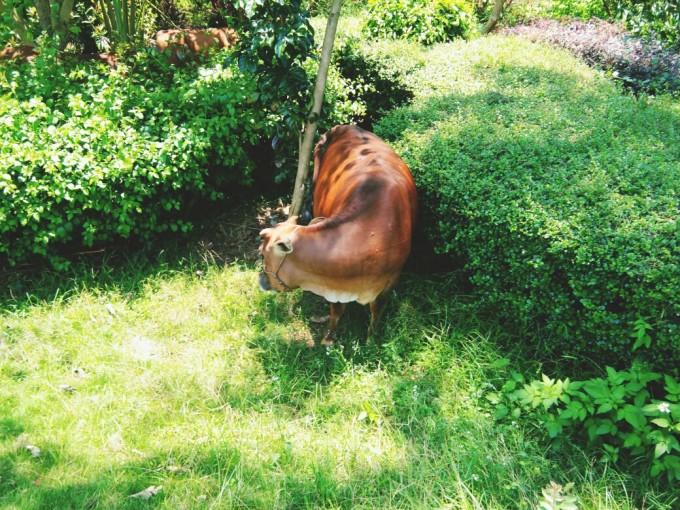 喂马,劈柴 周游世界,涠洲岛自助游攻略 - 蚂蜂窝