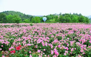 【黄冈图片】春暖花开✦共赏湖北粉色烂漫之旅