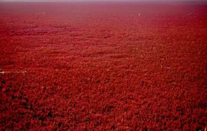【盘锦图片】金秋   红海滩   河蟹