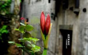 【洪江图片】感悟洪江——失落的城