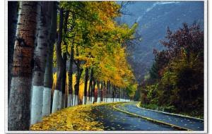 【延庆图片】携风带雨,延庆百里画廊,赏秋霜。