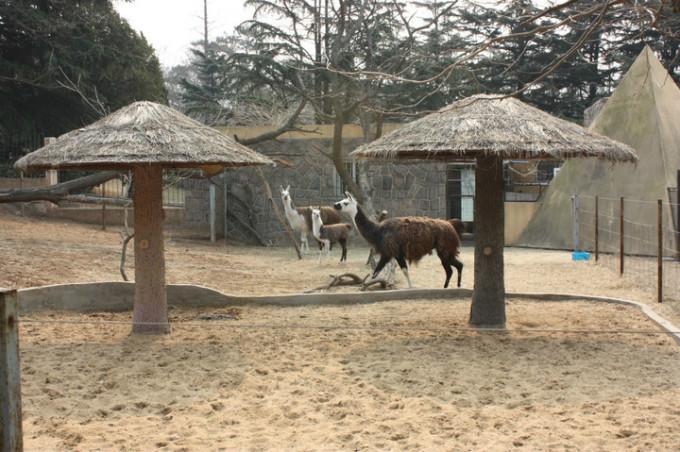 青岛野生动物园 · 行纪