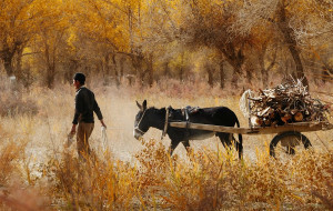 【和田图片】探访塔克拉玛干沙漠腹地的绿洲--达里雅布依