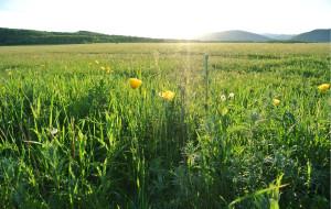 【额尔古纳图片】情系天边(呼伦贝尔草原之旅):第二天  体验恩和