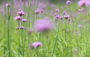 【沈阳图片】等着我,给你一抹紫色的浪漫......