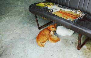 【古晋图片】古晋猫咪与小澳门,恋上你。(维塔的出国旅行日记)