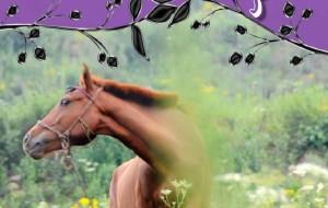 【涞源图片】放飞激情,感触草原---大众车友自驾涞源空中草原