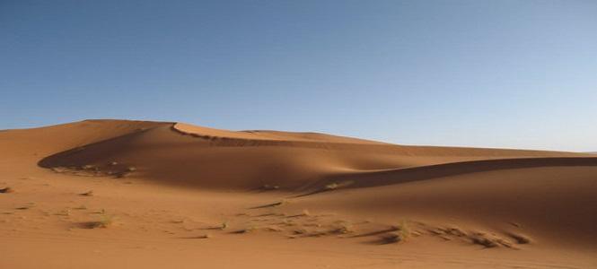 沙漠生物简笔画