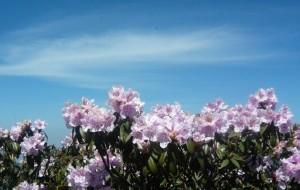 【米易图片】米易去龙肘山赏花游