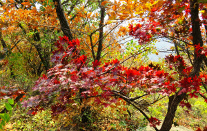 【蓟县图片】金秋十月,登天津最高峰九山顶