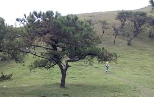 【罗定图片】野山野景:罗定八排山,奔波一天看天上草原,以及垃圾!(省内游6,15年10月)
