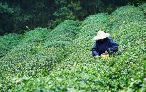 【茅山图片】到茅山,品一杯闲茶