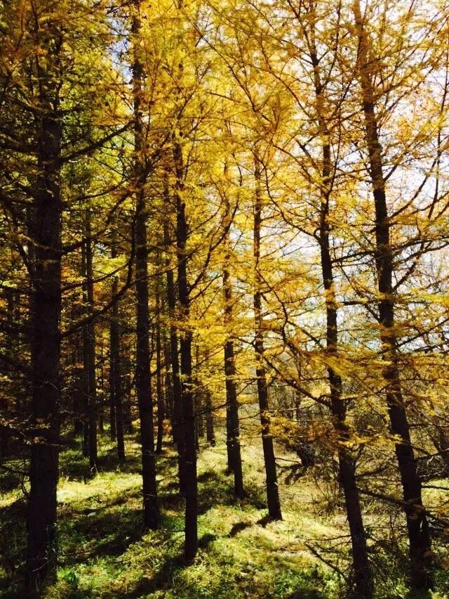 柳树沟自然风景区