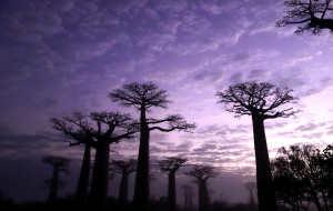 【马达加斯加图片】梦幻般的穆龙达瓦之三:我的非洲寻梦之旅(2)