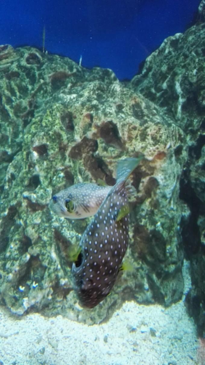 壁纸 海底 海底世界 海洋馆 水族馆 680_1211 竖版 竖屏 手机