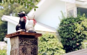 【伊豆市图片】電車で行こう!伊豆の花火!伊豆綺麗な海!