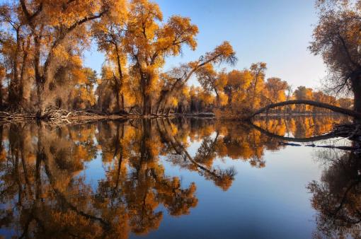 全世界胡杨林有10%在中国,而中国的胡杨林有90%在新疆塔里木河畔.