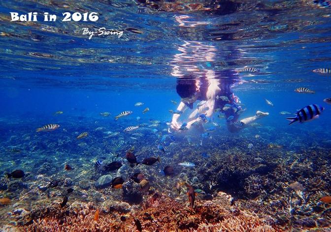 到蓝梦的往返船,酒店接送,蓝梦接送,午餐和潜水。午餐是在海藻田上的悬崖餐厅,大的螃蟹、披萨、饮料。两个人,整个套餐我们500元/人,浮潜用具蛮新的。 普遍的平台一日游是400多一个人的,只有一个潜水点,在我们的第二和第三个潜水点之间。,有水上 滑梯香蕉船之类的游玩项目,比较热闹。我因为比较在意浮潜并且不想玩水上 项目才选了包船。 我订的这家单浮潜3小时3个潜水点是180元,我觉得还是非常划算的。淘宝上面搜得到(需要网址请私信,不想被当打广告) 祝玩的开心,望采纳。附我的