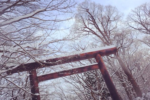 然后可以去五陵郭公园或者函馆热带植物园看猴子泡温
