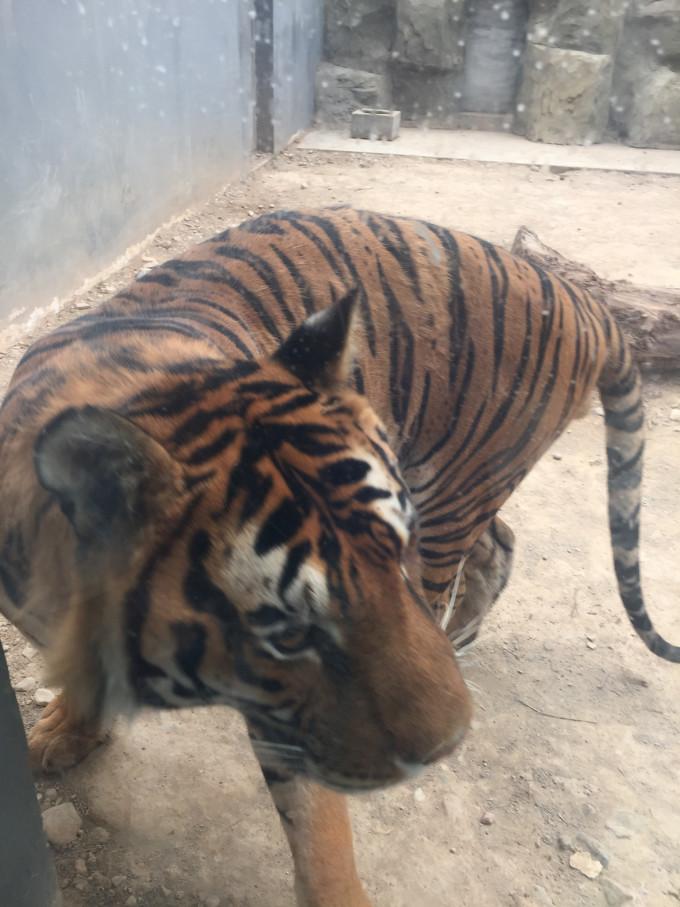 银川动物园位于中山公园里面.去过后的感觉是——心塞!