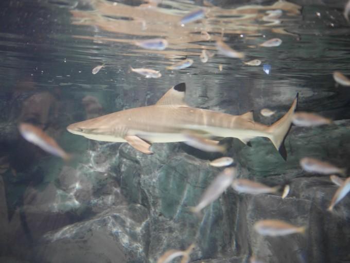 壁纸 动物 海底 海底世界 海洋馆 水族馆 鱼 鱼类 680_511
