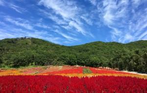 【蛟河图片】你一定要做世界上最美的花 —— 蛟河富江花海