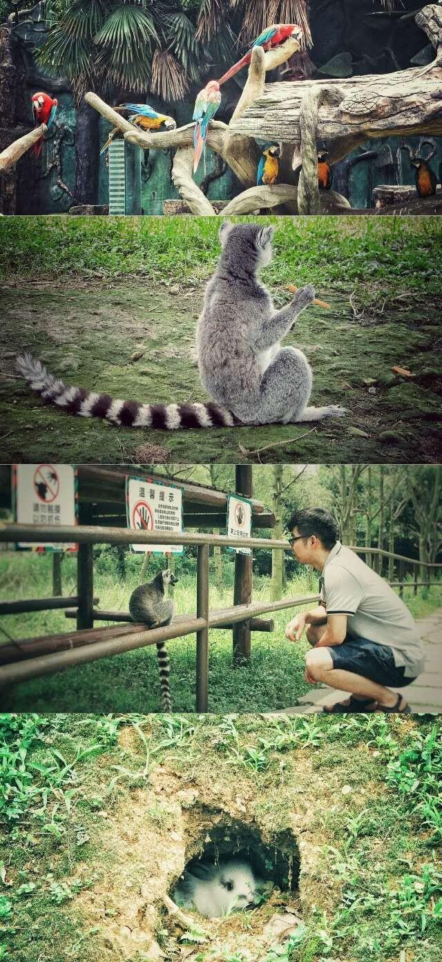 地点:富阳杭州野生动物园