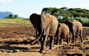 【肯尼亚图片】惊艳肯尼亚-10天野生动物探索之旅,含树顶酒店,天国之渡,1.5万字多图