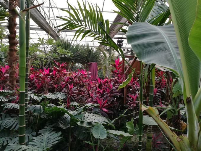 冬天京城的南国:北京呀路古热带植物园