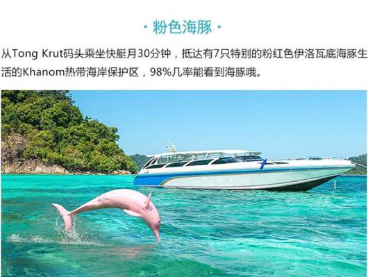 【梦幻粉红海豚】苏梅岛