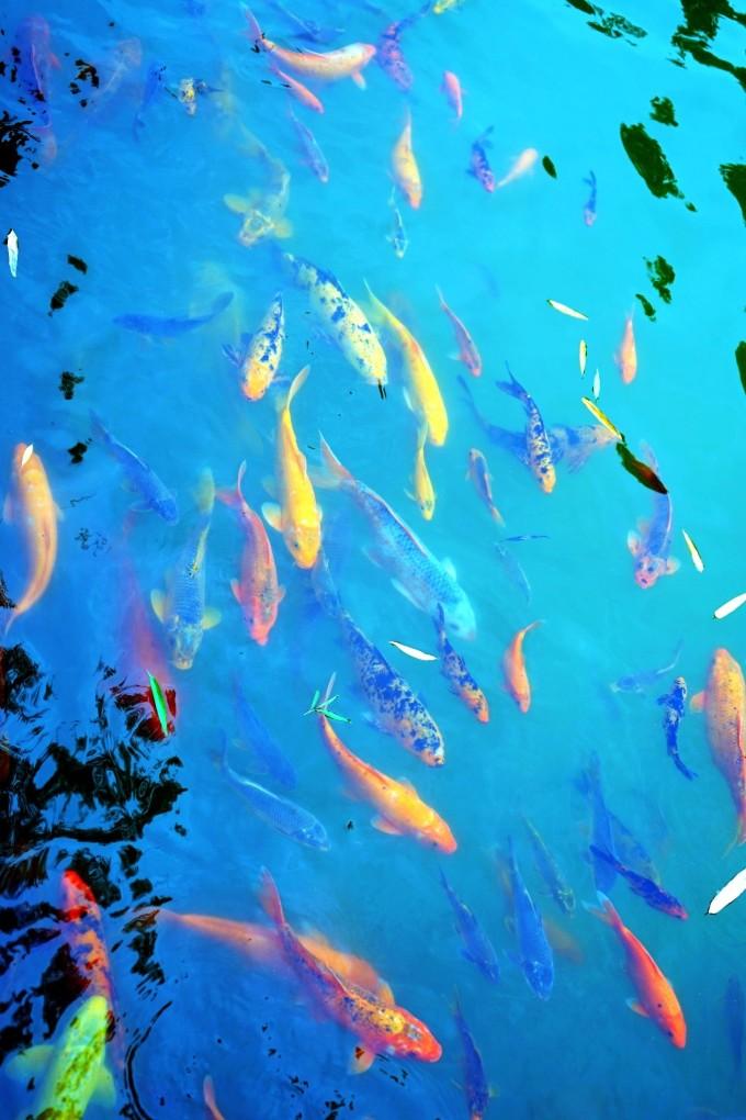 壁纸 海底 海底世界 海洋馆 水族馆 桌面 680_1020 竖版 竖屏 手机