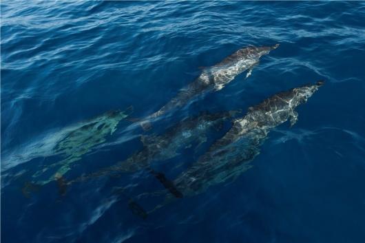 巴厘岛罗威那看海豚一日游(草莓小站 水果市场 巴厘岛生态园 浮潜 水