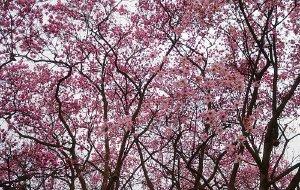 【江油图片】赴一场花的盛宴