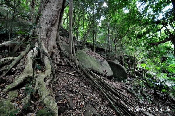海南中线是指从三亚出发从海南岛中部向北穿过五指山一直到海口,即三亚保亭五指山琼中海口。中线热带雨林密布,高山峻岭嵯峨,中线海拔千米的高峰一座座紧紧相连,几乎每一座山均陡峭难攀。中线的树林长得特别高大茂盛,依然保持着大片的原始热带雨林。温泉+热带雨林最能代表这里的特点。    看过东线的繁华、体验过西线的惬意,来到枝繁叶茂的中线,是否有想化身泰山领略这狂野的热带雨林的冲动?
