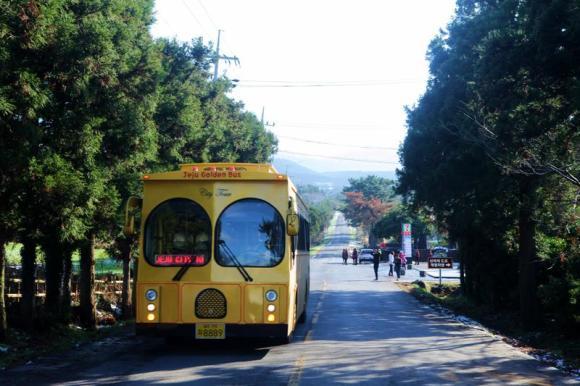 济州岛 黄金观光巴士一日券(当天不限次数乘坐)