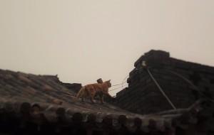 【榆次图片】一个人 俩个人 四个人 /路过山西,爱上三晋————平遥/恒山/云冈,走起来 换个星辰