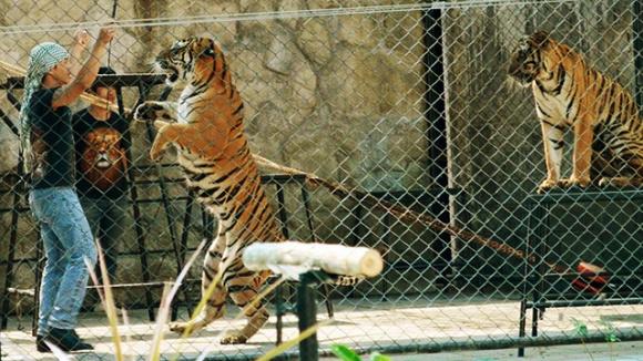 【亲子首选】芭提雅 是拉差龙虎园门票(动物园)