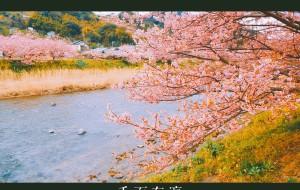【富士山图片】【樱花与武士】初遇日本,千面东瀛——【东京、伊豆、三岛、富士山】这些都是日本。