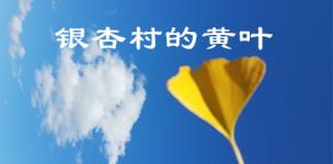 银杏村的黄叶